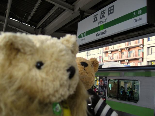 Cats_train1